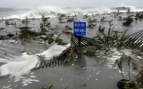 Post Sandy, Wetlands Could Help Shore Up NYC's Defense