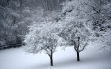 Going Out on a Limb: Forecasting Snowier Winters?