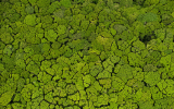 Image of the Day: For This Forest, It's Easy Being Green