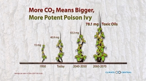 Rising CO2 Increases the Size of Poison Ivy Plants