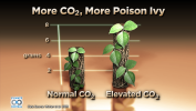 More CO2, More Poison Ivy