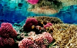 Acidic Oceans Could Quiet Coral Reefs