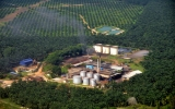A Renewable Solution to Palm Oil's Methane Problem