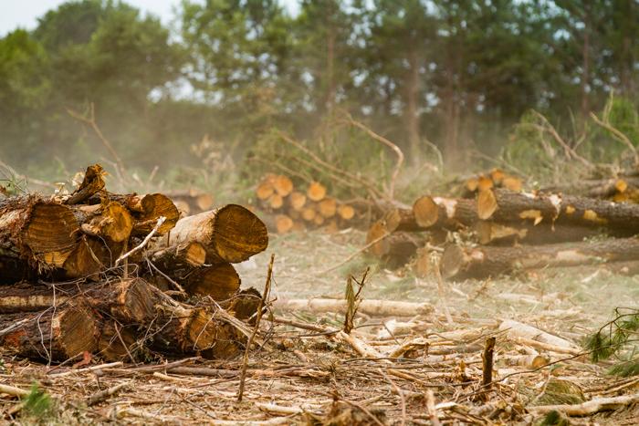 cutting down trees essay